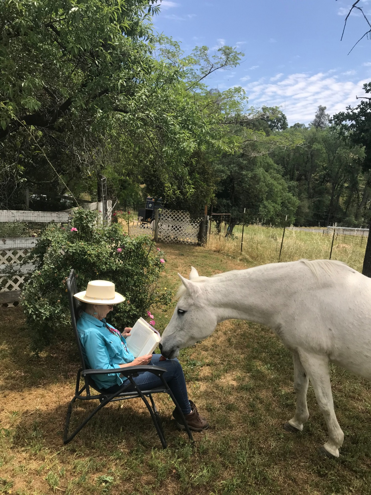 Horse Books for Grown Ups